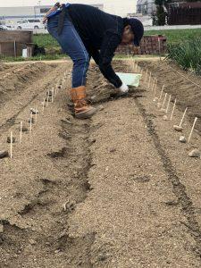フォーレスト農園のジャガイモ植え付け